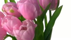 Tulips rotate Stock Footage