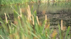 Farm dam - stock footage