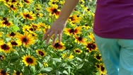 Stock Video Footage of girl leg rudbeckia flower