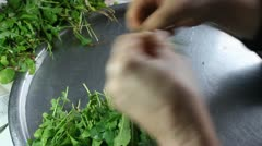 Cleaning Arugula Stock Footage