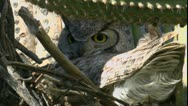 Stock Video Footage of Owl Flexible Neck Time Lapse