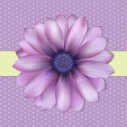 lilac background with gerber - stock illustration