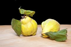 fresh quinces - stock photo