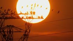 Cormorants enjoying mesmerising sunset - stock footage