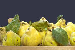 Stock Photo of fresh quinces