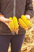 Stock Photo of corn cob