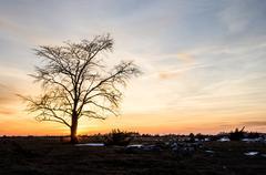 lone elm tree at coloured sky - stock photo