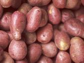 Red potatoes Stock Photos