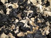 Dried black fungi Stock Photos
