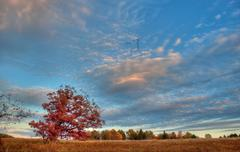 Solitary tree with beautiful sky above in the countryside - stock photo