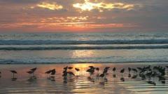 Sunset Beach #49 Stock Footage