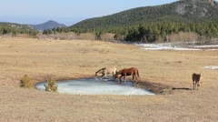 Horses drinking icy water #2 Stock Footage