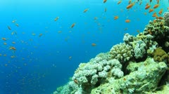 Coral Reef Scene Stock Footage