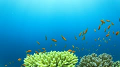 Coral Reef and Tropical Fish Stock Footage