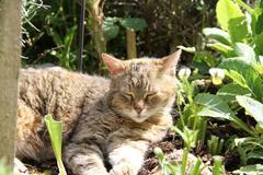 Sleeping cat in the garden - enjoing the sun - stock photo