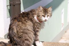 Longhair cat sitting in the sun - stock photo