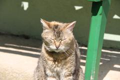 Sleeping cat in the sun - stock photo