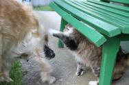 Fighting cat and dog Stock Photos