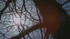 Midday sun flares through the branches of an Oak tree Stock Footage