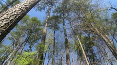 Huntsville Trees Stock Footage