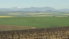 Scenic shot of vineyards, canola and wheat fields with snow topped mountain PAL Stock Footage