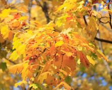 Yellow leafs on tree Stock Photos