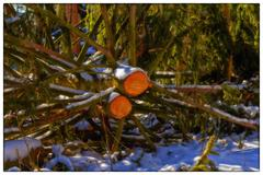 felled tree - postcard - diagonally - stock photo