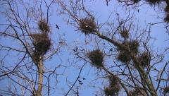 Crow's nest and anxiety in a flock - stock footage