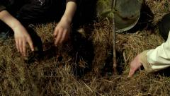Planting a young tree in the ground (cedar). Stock Footage