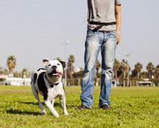 Running pitbull with dog owner at the park Stock Photos