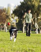 Border collie catching dog ball toy at park Stock Photos