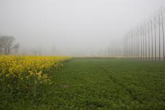 Punjabi agriculture Stock Photos