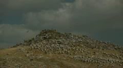 Garbage dump 0313 1 Stock Footage