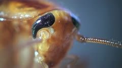 Head cockroach micro Stock Footage