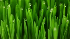 Drops of dew on the grass - stock footage