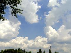 Blue sky with verdure Stock Photos