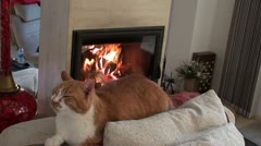 Cat on sofa zoom in fireplace - stock footage
