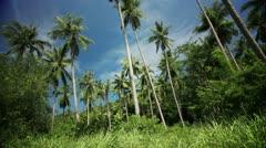 Palmtree Jungle Background Stock Footage