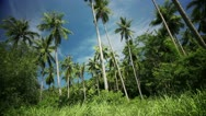Stock Video Footage of Palmtree Jungle Background