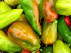 Crop of multi-coloured bulgarian sweet pepper Stock Photos