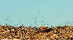 Dump and crows flying over garbage Stock Footage