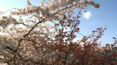Spring season in the city - stock footage
