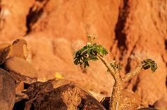 Plant Struggling in Desert Stock Photos