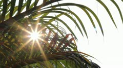 Sunshine Through Palm Leave Slider 2 Stock Footage