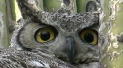 Owl Eyes Extreme Close Up Stock Footage