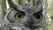 Stock Video Footage of Owl Eyes Extreme Close Up