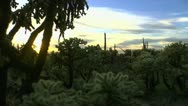 Time Lapse Sun Glow Cactus Forest Stock Footage