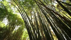Sunlight shining trough bamboo forrest Stock Footage