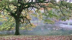 Ground covered with fallen autumn leaves beneath a lakeside tree Stock Footage