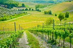 Stock Photo of hills and vineyards